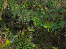 Pantano de la Florida del verano tardío de HDR imágenes de archivo libres de regalías