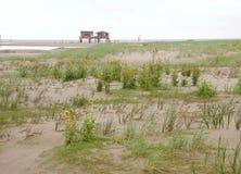 Pantano de marea fotografía de archivo