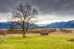 Pantano de Murnauer Moos en Baviera Fotografía de archivo