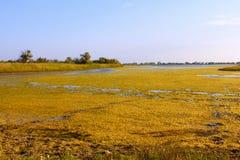 Pantano de sal cubierto con las plantas de agua (ii) Foto de archivo