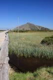 Pantano de turba en las montañas gigantes Foto de archivo libre de regalías