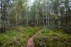 Pantano del bosque foto de archivo
