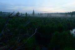 Pantano del bosque antes del amanecer en una neblina brumosa Fotografía de archivo libre de regalías