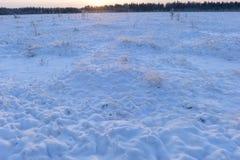 Pantano del bosque Nevado en una mañana escarchada del invierno Fotografía de archivo libre de regalías