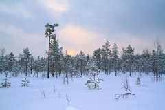 pantano del invierno imagen de archivo libre de regalías