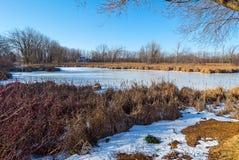 Pantano del invierno Foto de archivo libre de regalías