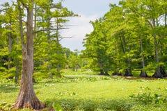Pantano del lago Reelfoot Imagen de archivo