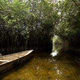 Pantano del mangle Foto de archivo