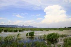 Pantano después de la lluvia Imagen de archivo libre de regalías