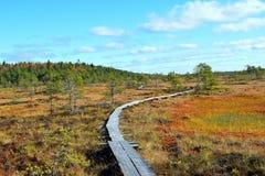 Pantano el otoño Foto de archivo libre de regalías
