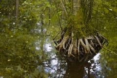Pantano en el bosque foto de archivo