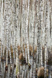 Pantano en el bosque Fotografía de archivo