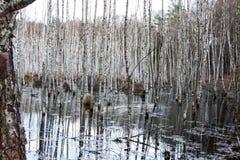 Pantano en el bosque Imagen de archivo libre de regalías