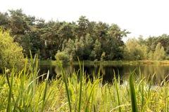 Pantano en el brezo de Kalmthout, Europa Foto de archivo libre de regalías