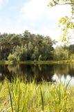 Pantano en el brezo de Kalmthout, Europa Imágenes de archivo libres de regalías
