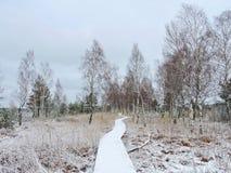 Pantano en invierno, Lituania de Aukstumalos Imágenes de archivo libres de regalías