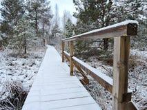 Pantano en invierno, Lituania de Aukstumalos Fotografía de archivo