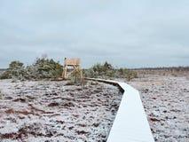 Pantano en invierno, Lituania de Aukstumalos Imagenes de archivo