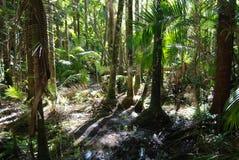Pantano en la isla de Hinchinbrook Fotos de archivo