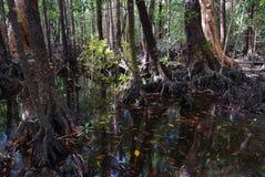 Pantano en la isla de Hinchinbrook Fotografía de archivo