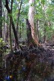 Pantano en la isla de Hinchinbrook Fotografía de archivo libre de regalías