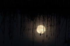 Pantano en la noche Imagen de archivo libre de regalías