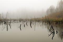 Pantano en niebla Imagen de archivo