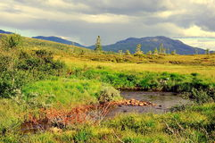 Pantano en verano Imagen de archivo