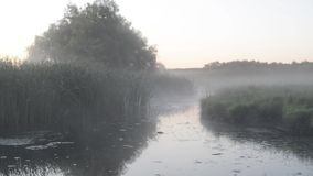 Pantano expansivo con la niebla blanca almacen de video