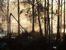 Pantano Forest2 de Cypress de la niebla de la mañana Fotos de archivo libres de regalías