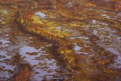 Pantano infranqueable Foto de archivo libre de regalías