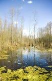 Pantano profundo en un matorral. Foto de archivo libre de regalías