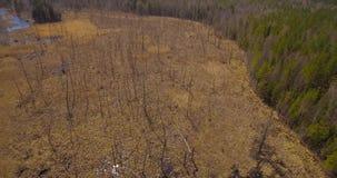 Pantano rodeado por el bosque metrajes