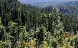 Pantano y bosque en verano Foto de archivo