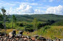 Pantano y bosque en verano Imagen de archivo