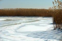 Pantano y humedales congelados fotografía de archivo libre de regalías