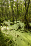 Pantano y madera Fotos de archivo