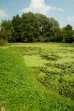 Pantanos Foto de archivo