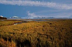Pantanos con el fondo de la montaña Imágenes de archivo libres de regalías