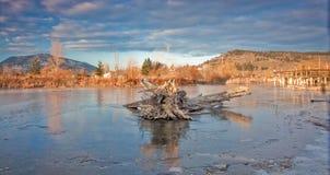 Pantanos congelados Fotos de archivo libres de regalías