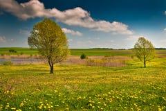 Pantanos de Biebrza Foto de archivo libre de regalías