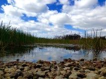 Pantanos de la Florida Fotografía de archivo libre de regalías