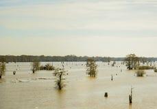 Pantanos de Luisiana Fotografía de archivo