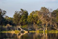 Pantanos de Okavango en la puesta del sol Imágenes de archivo libres de regalías