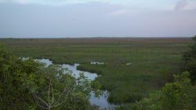 Pantanos del agua de Casanare, parque de Wisirare, Colombia almacen de metraje de vídeo