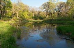 Pantanos del parque de Battle Creek Foto de archivo