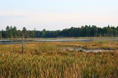 Pantanos en Canadá Imagen de archivo