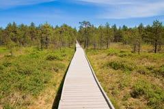 Pantanos en el parque nacional Lahemaa en Estonia 3 Imagen de archivo