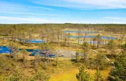 Pantanos en Estonia imágenes de archivo libres de regalías