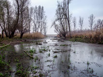 Pantanos en la reserva especial Karadjordjevo, Serbia Foto de archivo libre de regalías